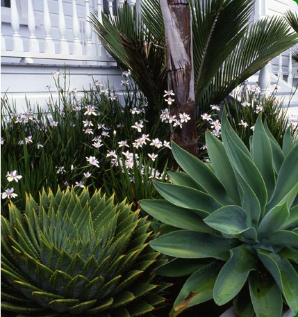 1000 images about garden ideas on pinterest new zealand for Garden design ideas new zealand